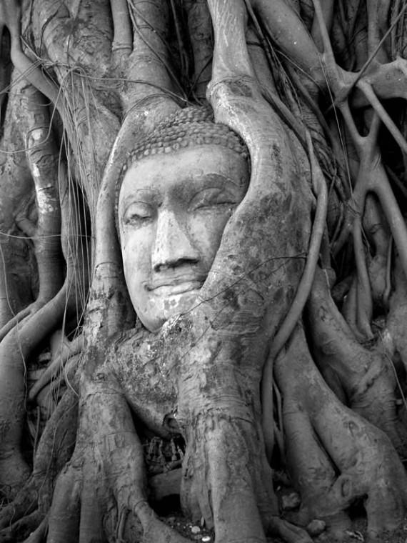 Banyan Tree Buddha